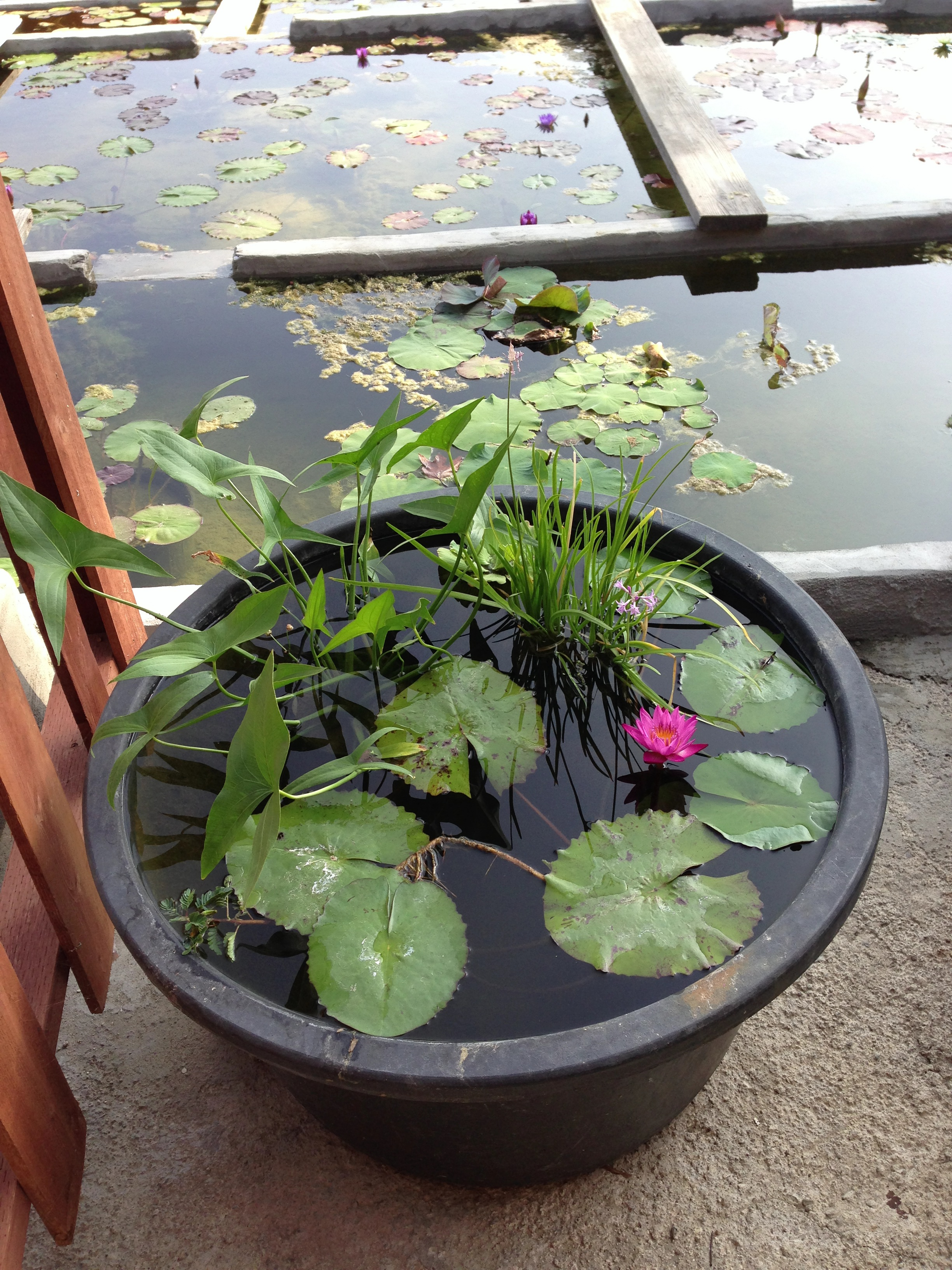Tub gardens for your home