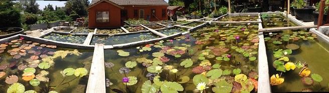 Water Garden Shop