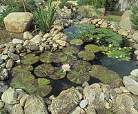 Lily pads in a rough stone walled pond
